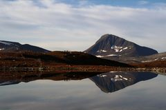 Bydło one fechtują się na brzeg Lapland jezioro obrazy royalty free