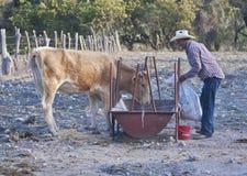 Bydło rancho outside zdjęcia royalty free