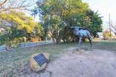 Bydło rzeźba Teksas longhorny przy Sumiastą zatoczką w Round Rock, z niebieskim niebem na słonecznym dniu obraz stock
