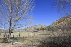Bydło zakazuje na Nowym - Mexico rancho Zdjęcia Royalty Free