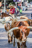 Bydło Prowadnikowy Fr Warty Teksas Zdjęcia Stock