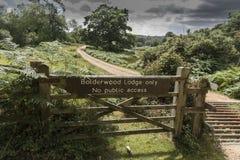 Bydło siatka Nowy Lasowy Hampshire UK i brama Zdjęcie Royalty Free