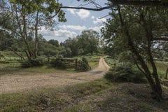 Bydło siatka Nowy Lasowy Hampshire UK i brama Obraz Royalty Free