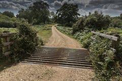 Bydło siatka Nowy Lasowy Hampshire UK i brama Fotografia Royalty Free