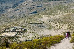 Bydlę klauzura w Andes obraz royalty free