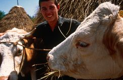 Bydlę target713_0_ w Kosowo. obraz stock