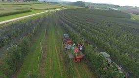 Byfolk som arbetar i äpplefruktträdgård arkivfilmer
