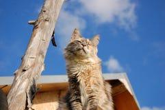 Bygd Cat Enjoying Sunshine arkivfoto