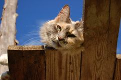 Bygd Cat Enjoying Sunshine royaltyfria bilder