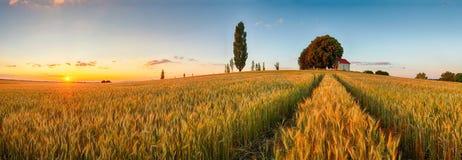 Bygd för panorama för sommarvetefält, jordbruk