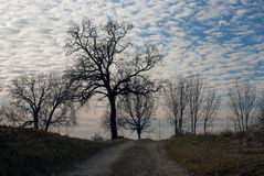 Bygd i en vinterdag Fotografering för Bildbyråer