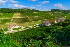 Bygd och vingårdar i Chablis område royaltyfri foto