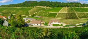 Bygd och vingårdar i Chablis område royaltyfri bild
