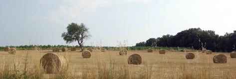 bygd tuscany Royaltyfri Fotografi
