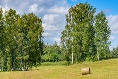 Bygdfält med en ensam höstack bland träd av björken Arkivfoto
