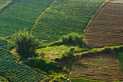 Bygdgrönsakfält på Kundasang, Sabah, Malaysia, Borneo Royaltyfri Bild