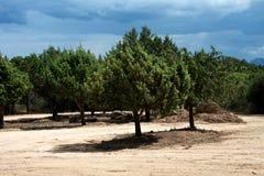 Bygdlandskap med träd Royaltyfria Bilder
