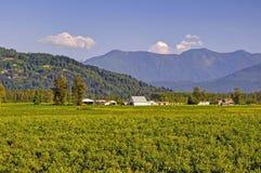Bygdsikt: blåbärfält, ladugårdar och berg Royaltyfri Fotografi