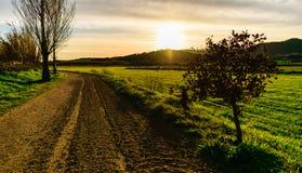 Bygdväg från fält i trevlig solnedgång arkivbild