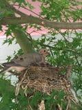 Bygga bo fågeln i träd Arkivbild