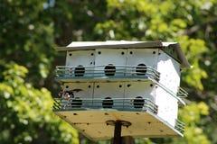 Bygga bo för fåglar arkivfoto
