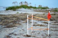 Bygga bo plats för Loggerheadhavssköldpadda på Hilton Head Island Beach royaltyfri foto