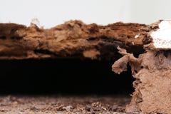 Bygga bo termit, bakgrund av redetermit, skadat trä som ätas av termit, eller den vita myran royaltyfri fotografi