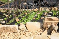 Byggande av en formell trädgård för grönsak och för ört. Arkivbild