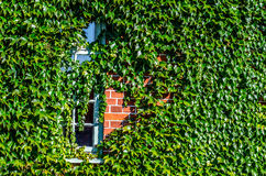 Byggande dold murgröna Fotografering för Bildbyråer