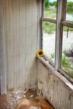 byggande försämras Fotografering för Bildbyråer