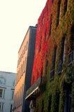 byggande green arkivbilder