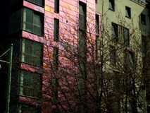 byggande pink Royaltyfria Bilder