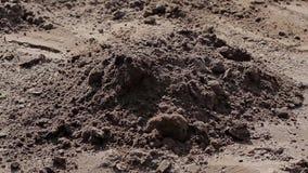 Byggmästare som gräver jordningen stock video