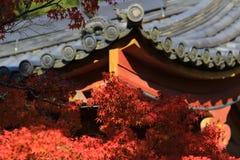 Byggnad för japansk stil med höstsidor Royaltyfria Foton