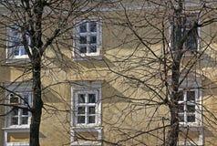 Byggnad till och med treesna Arkivfoto