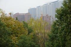 Byggnad under konstruering bak träden royaltyfri foto