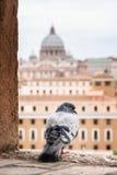 Byggnader av Rome med VaticanenSt Peter Dome i bakgrund Royaltyfri Foto