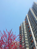 Byggnader och blommor Royaltyfri Foto
