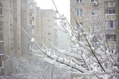 byggnader som faller över snowtrees Arkivbilder