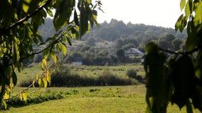 Byggnaderna är mellan gröna träd arkivfilmer