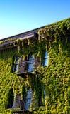 byggnadsmurgröna Arkivfoto