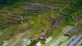 Byhus nära risterrassfält Fantastisk abstrakt textur Banaue Filippinerna Royaltyfri Bild