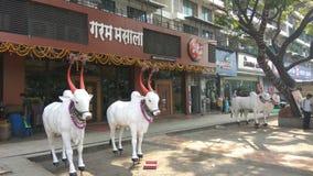 Byków zwierzęta Obraz Stock