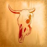 byk czaszka Fotografia Stock