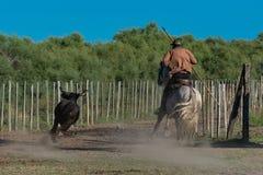 Byk i koń obraz stock