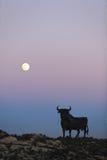 Byk i księżyc Obraz Stock