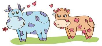 byk krowa Zdjęcie Stock