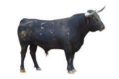 byka bullfight odosobniony potężny hiszpański biel Zdjęcie Stock