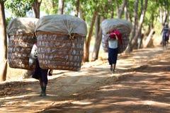 Bykvinnor som in bär stora korgar av produce royaltyfri bild