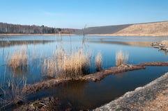 Byltehög i skog och den förorenade sjön Arkivfoton